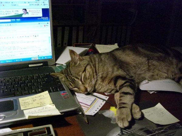 Soseki, dormido mientras aprendía a escribir