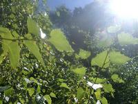 La mecánica cuántica actúa durante la fotosíntesis