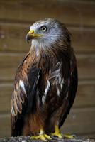 El 23% de las aves españolas está en peligro de extinción