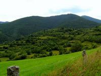 El pino negro se ha extendido por 9.000 nuevas hectáreas del Pirineo catalán en los últimos 50 años