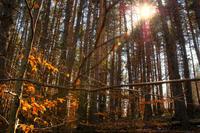 Los bosques son ahora protagonistas