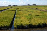Un atlas recogerá los paisajes agrarios de España