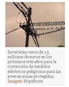 El MARM destina 13 millones para proteger a las aves de los tendidos eléctricos