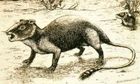 Descubren un nuevo mamífero que vivía a la sombra de los dinosaurios de Teruel