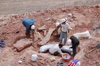 Recuperan un nuevo dinosaurio encontrado en la Patagonia