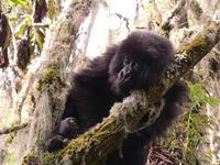 Humanos y primates comparten un ritmo de envejecimiento similar