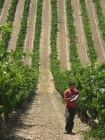La productividad y la calidad de la uva varía en función de la zona de la parcela en la que se cultiva