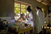 La lucha contra el cáncer ayuda a la erradicación de la malaria