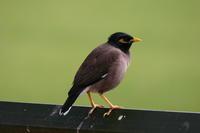 Las aves urbanitas son más valientes y exploradoras que las de entornos naturales