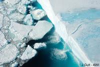 Las especies del mar profundo colonizan la plataforma continental de la Antártida