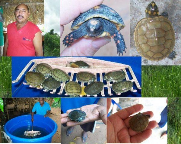 protección de la fauna local
