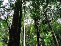 Plantar bosques en zonas de cultivo reduce 'poco' los efectos del cambio climático
