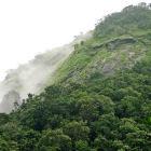 La Cumbre de Río 'ignoraría' los bosques, dicen los científicos