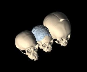 El bipedismo contribuyó al desarrollo del cerebro