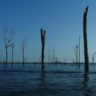 Represas tropicales: grandes fuentes de gas invernadero