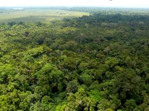 Naciones ricas en bosques: el financiamiento de REDD+