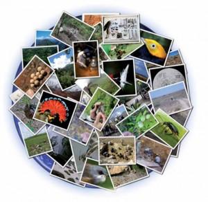 ¿Se buscan 2.000 taxónomos para cartografiar la biodiversidad del planeta?