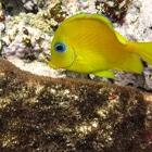 Costa brasileña registra una pérdida de arrecifes de coral