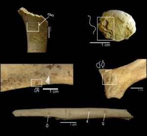 Los homininos podían modificar los huesos sin necesidad de herramientas