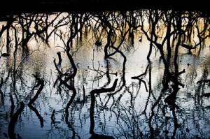 REDD+ Los negociadores en Doha deberían preocuparse por los manglares