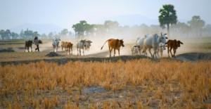 REDD+: Un nuevo mundo, el futuro de la deforestación