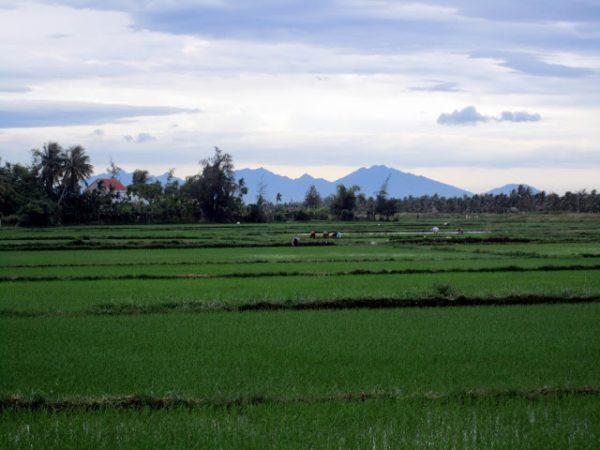 Arrozales camino de Cuan Dai