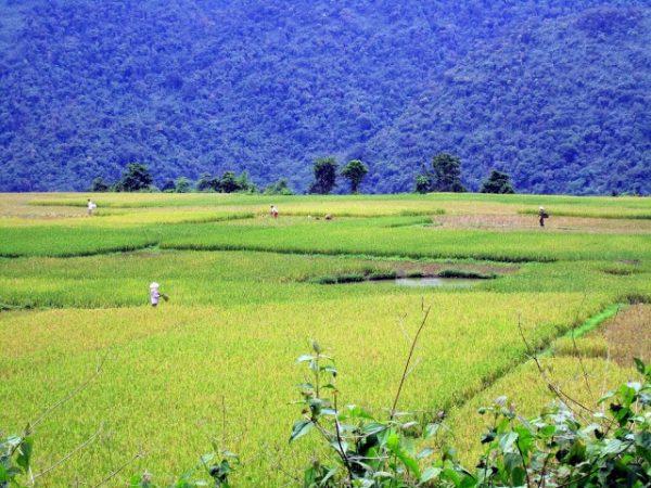 Cultivos en la provincia de Quang Ninh