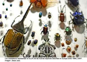 coleopterosjj