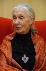 Jane Goodall en su visita al Museo de la Evolución. / MEH.