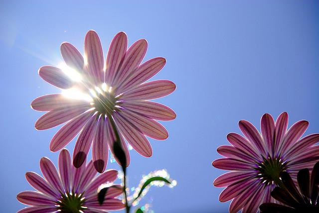 Flores. Primavera