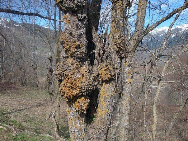 Primavera en los Pirineos 12