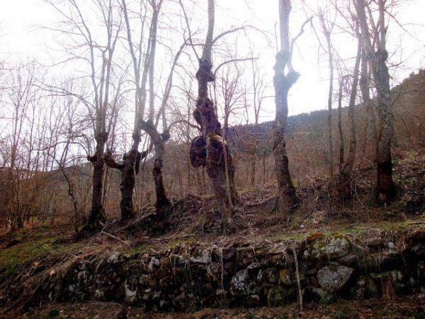 Primavera en los Pirineos 13