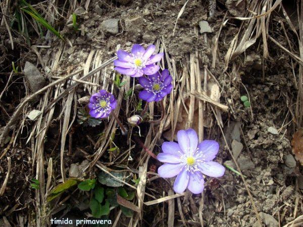 Primavera en los Pirineos 7