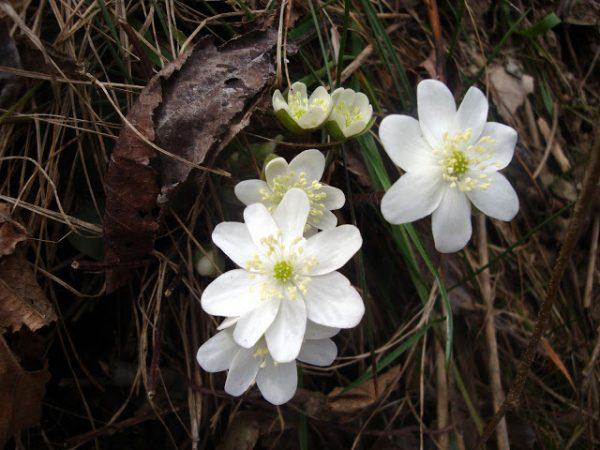 Primavera en los Pirineos 8