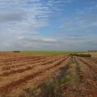Argentina busca diversificar su portafolio de cultivos transgénicos Eugeni_Dodonov/Flickr