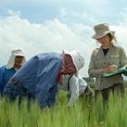 Investigación en genes de plantas para ayudar a temas de seguridad alimentaria no recibe los fondos requeridos Flickr/ Xochiquetzal Fonseca/CIMMYT