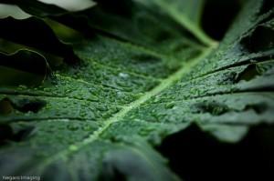 Sin los extensos bosques de la cuenca del Congo el régimen de lluvias a nivel regional se vería gravemente perturbado.
