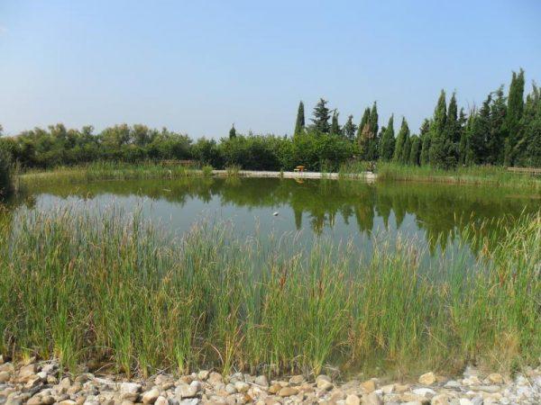 Laguna. Un oasis para la fauna... Escuela Internacional de la Rosacruz Áurea - Lectorium Rosicrucianum