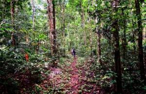 Los tratados de comercio pueden ser una herramienta para abordar la tala ilegal, pero no reemplazan la política efectiva de gestión forestal en los países exportadores, afirma Pablo Pacheco, investigador del Centro para la investigación Forestal Internacional.