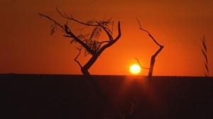 l Cerrado requiere atención especial: Conciliar el desarrollo y la conservación para asegurar que no se pierda la región. Fotografía cortesía de TV Brasil – EBC