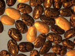 Las semillas de chía son ricas en omega-3 y compuestos antioxidantes. / Loreto Muñoz et al.
