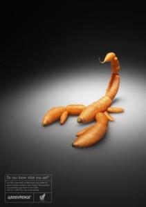 zanahoria transgénica