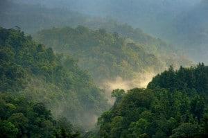 Bosques en Gede Pangrango, West Java, Indonesia. Nueva investigación indica que la elevación en la tasa de fijación de carbono podría no estar vinculada con el cambio climático, como se había pensado. Fotografía: Ricky Martin/CIFOR