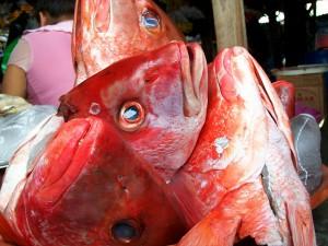peces pescado
