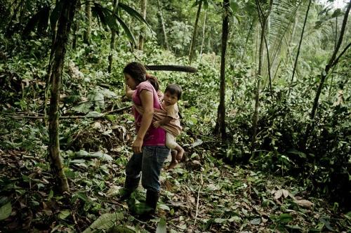 Los bosques estatales sustentan a los pequeños productores