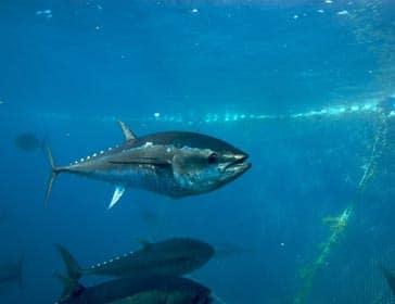 Piden que se detenga la sobre-explotación pesquera