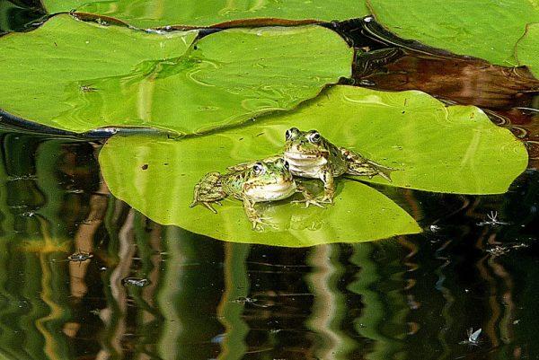 España: un gran charco de ranas