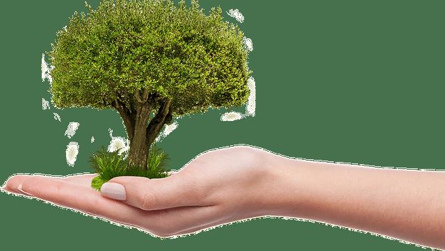 crecer árbol medioambiente