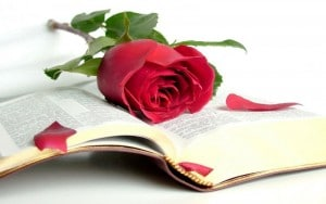 Sant Jordi rosa libro
