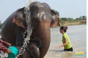 1-Cuidado de elefantes (Tailandia)